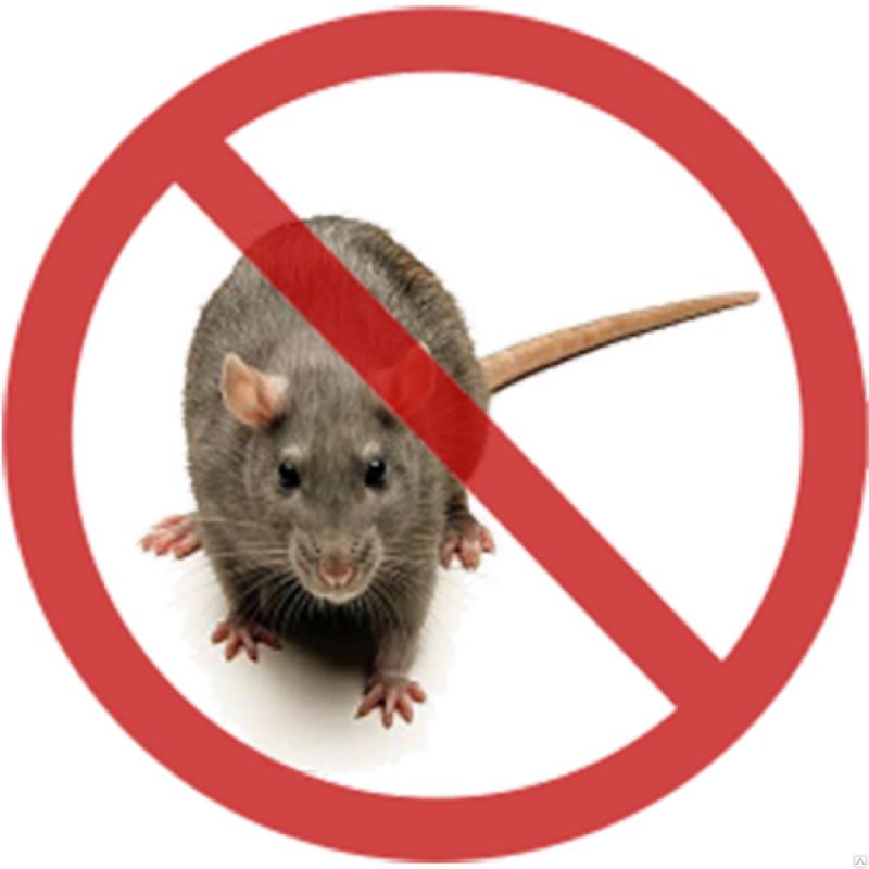 Картинки по запросу Уничтожение крыс