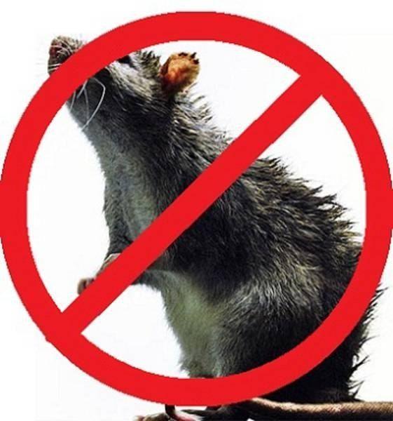 Заказать Уничтожение грызунов Алматы