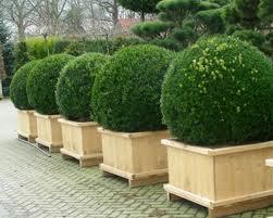 Заказать Декоративная обрезка деревьев