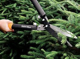Заказать Санитарная обрезка деревьев