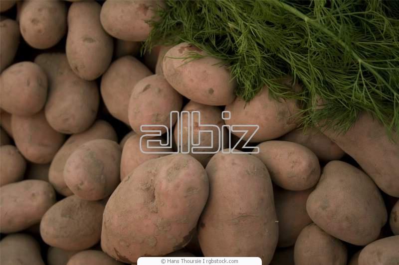 Заказать Закупка сельхозпродукции