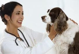 Order Services are veterinary
