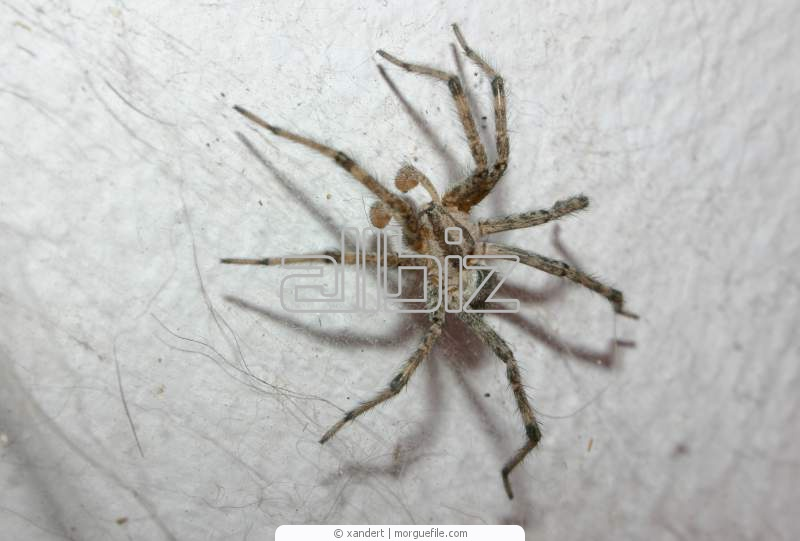 Заказать Уничтожение пауков, дезинсекция