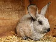 Заказать Разведение кроликов