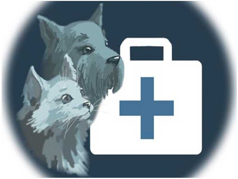 Заказать Скорая ветеринарная помощь