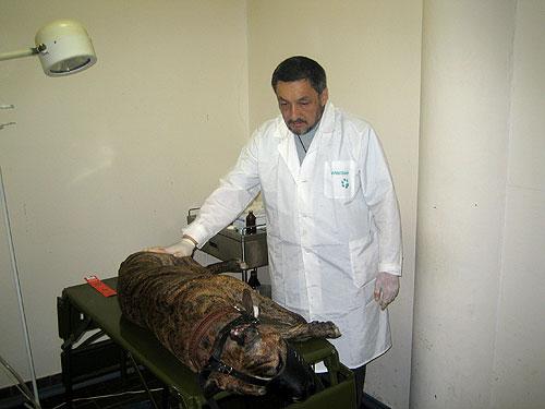 Заказать Все виды ветеринарных хирургических операций
