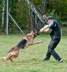 Заказать Охрана с собаками