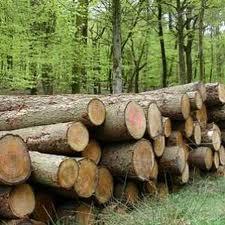 Заказать Выращивание строительного леса