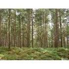 Заказать Воспроизводство и выращивание лесов