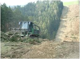 Заказать Услуги лесного хозяйства