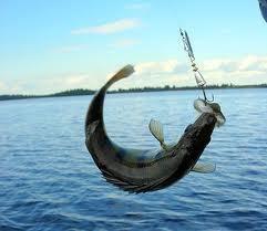 Заказать Ловля рыбы