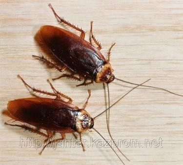 Order Extermination of household insects in apartments (2-roomed)