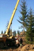 Зимняя посадка деревьев в Алматы