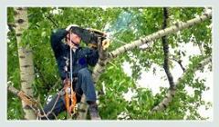 Обрезка деревьев и кустарников, кронирование деревьев