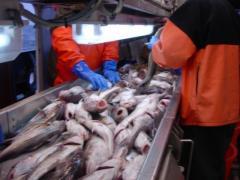 Переработка рыбной продукции