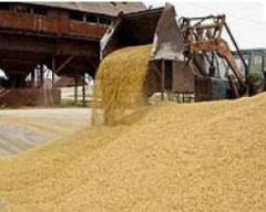 Биржевая торговля зерном
