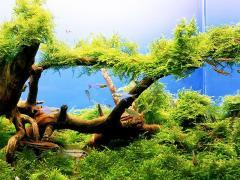 Registration of aquariums