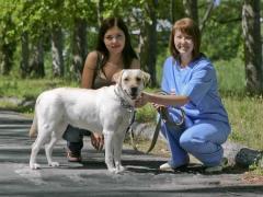 Consultations veterinary in Pavlodar