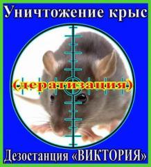 Уничтожение крыс, дезинфекция, дезинсекция,