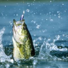 Fishing and rest on Lake Balkhash