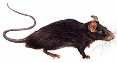 Cleaning of infections, insects and rodents in