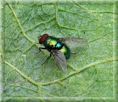 Extermination of flies, Disinsection, Dezstantion