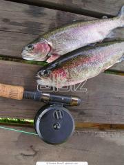 Fishing base