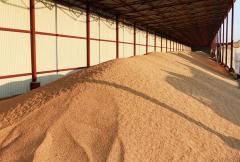 Заготовка и хранение зерна