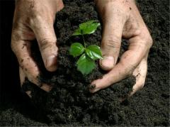 Tests of fertilizers