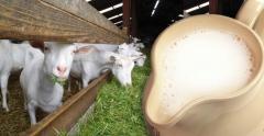 Development of business plans on milk processing
