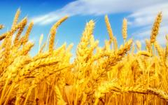 Barley processing