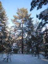 Зимний отдых,  зимний отдых на природе