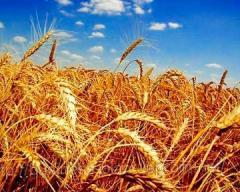 Опыление сельскохозяйственных культур