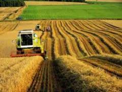 Сельское хозяйство, перевозка