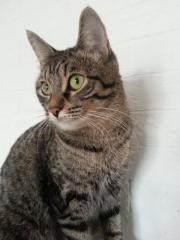 Happy cats оказывает услуги по уходу за кошками на