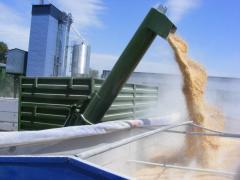 Хранение зерна в Казахстане