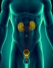 Urology andrology