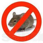 Deratization of mice