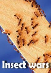 Extermination of ants