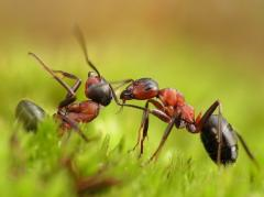 Fight against ants