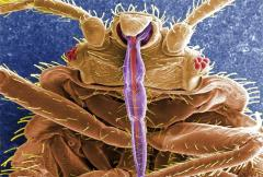 Fight against bed bugs