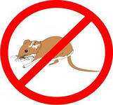 Services in extermination of rodents