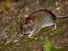 Services in fight against rodents