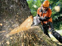 Cutting and raskorchevka of trees