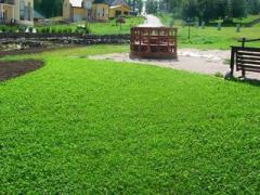 Creation of a lawn by a dernovaniye