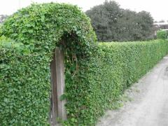 Device of green hedges