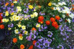 Flower beds from annual plants