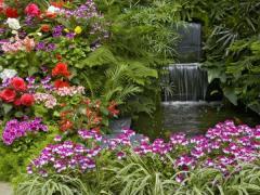 Устройство цветников (однолетние и многолетние