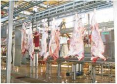 Point on slaughter of cattle