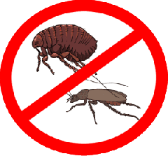 Fight against bugs